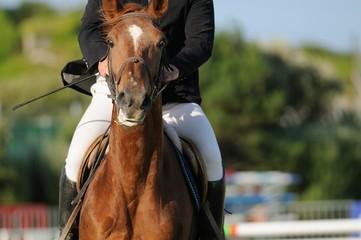 Papiers peints Equitation cheval ayant peur devant un obstacle
