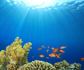 Coral Reef Scene with Tropical Fish in the Ocean