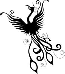 silhouette of phoenix