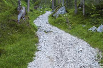 Weg duch den Wald im Gebirge