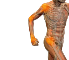 High resolution 3D human for anatomy, medicine and health