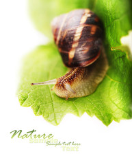 Background with green leaf and snail