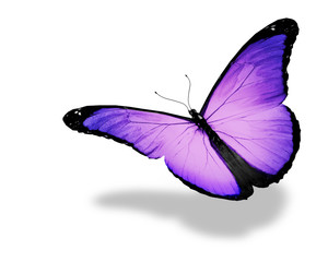 Light violet butterfly flying, isolated on white background