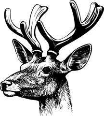 Red deer's head