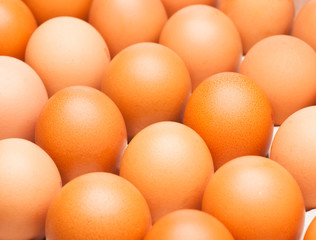 group ordered chicken brown eggs