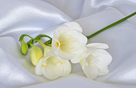 White Freesia on White Satin