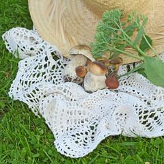 mushrooms setting on grass