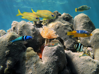 Hard coral and colorful fish