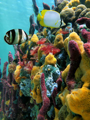 Colorful underwater life with sponges, marine worms and tropical fish, Caribbean sea