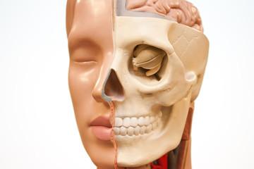 Face of medical dummy