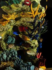 Wall Mural - Tropical fish and coral