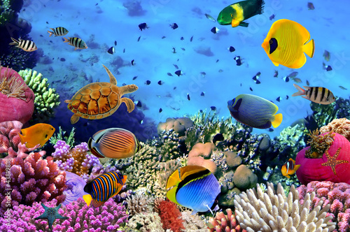 Coral Kostenlos Testen