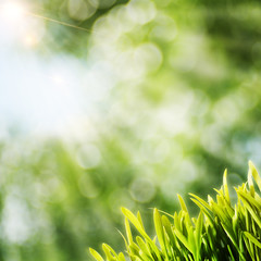 Summer natural backgrounds with sun beam and green grass