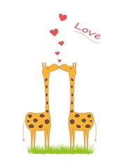 Küssende Giraffen