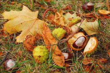 Herbst - Kastanien und Laub