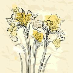 Tuinposter Abstract bloemen Iris flower vector illustration.