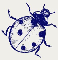 Ladybug. Vector sketch