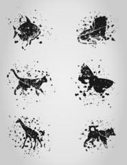 Animal a blot