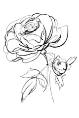 a sketch of rose on a white background