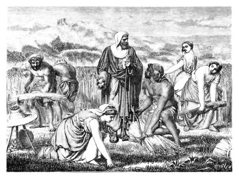 Semitic biblical scene : Harvest - Moisson - Ernte