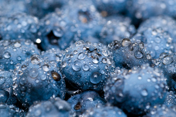 Wet blueberries close up