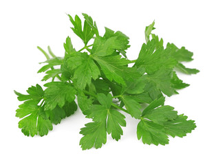 Branch of fragrant fresh parsley