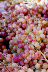 GreekGrapes