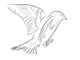 Sketch of a flying up bird