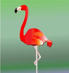 Flamingo bird vector eps10