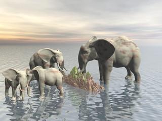 elefanti4