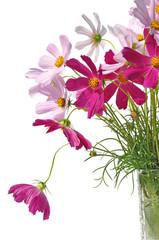 bouquet flower field