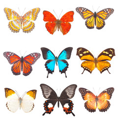 Beautiful varicoloured butterflies are isolated