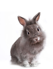 Young Adorable Little Bunny Rabbit