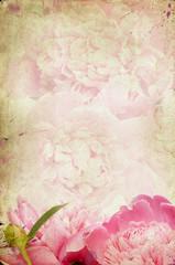 Vintage flower (peony)