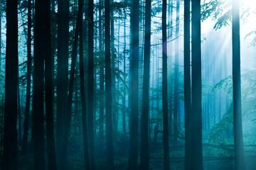 Las w odcieniach błękitu