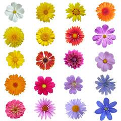 freigestellte Blüten