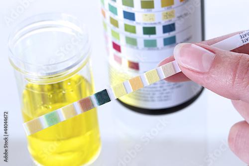 how to eliminate pet urine odor in carpet