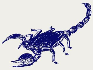 Emperor Scorpion. Sketch