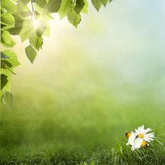 chamomile flower in grass