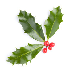 Christmas Holly (Ilex) with red berries, isolated on white.