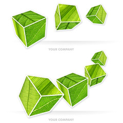 my company vegetal cube 0