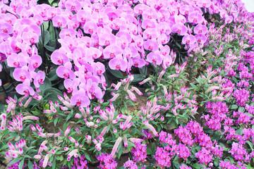garden pink orkid