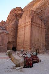 Kamel vor Ruine in Petra