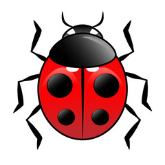 beautiful vector ladybird on white background eps 8
