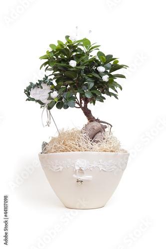 Bonsai Baum Hochzeit Geschenk Stock Photo And Royalty Free Images