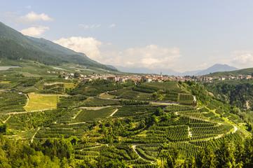 Fotobehang Wijngaard Val di Non (Trento)