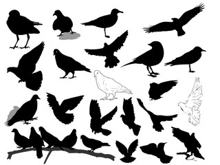 Set of 21 birds and silhouettes of birds