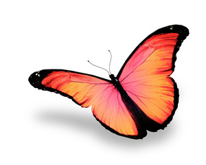 Pink butterfly, isolated on white