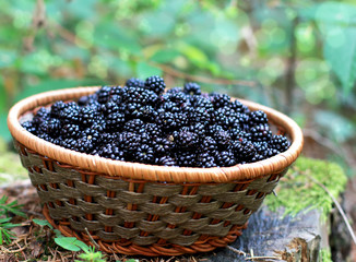 organic blackberries from the fores