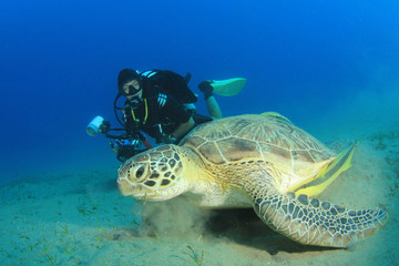 Woman Scuba Diver and Green Sea Turtle